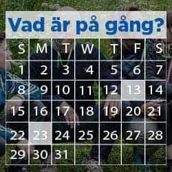 medveten-andning-meny-vad-ar-pa-gang2